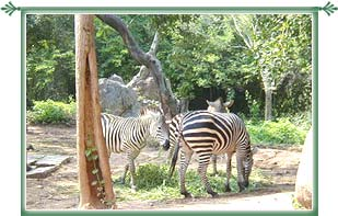 Bannerghatta National Park Bangalore